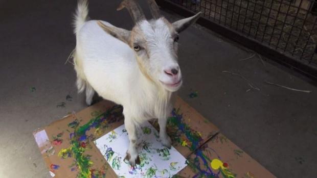 goat art